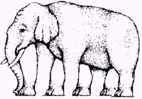 Quantas pernas tem o elefante?